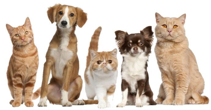 Image de chats et chiens